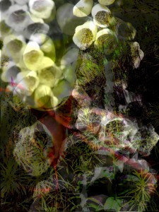 dance in the arboretum