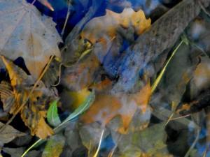 leaf light9